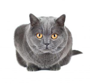 Assicurazione gatto : scopri la formula