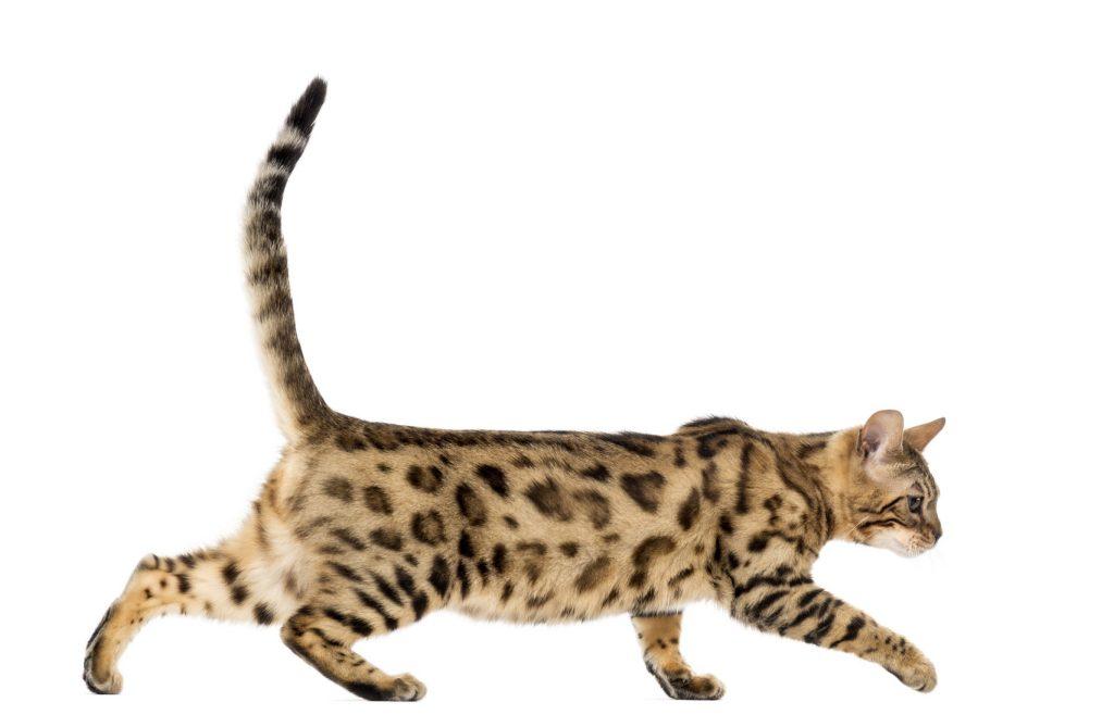 Assicurazione gatto : incidente