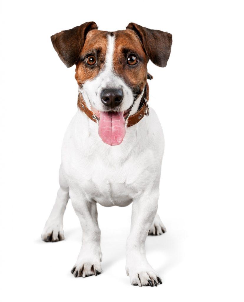 Asssicurazione per cane
