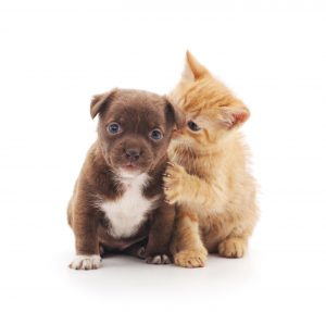 Assicurazione cane gatto : come funziona ?