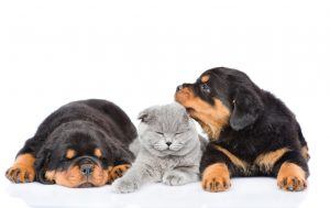 Contattaci assicurazione cane gatto