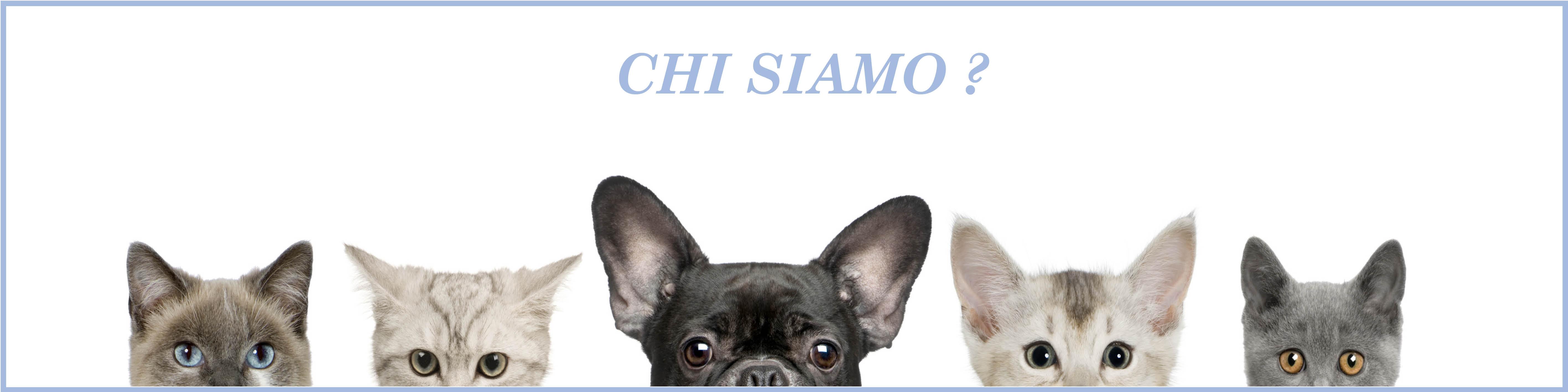 Assicurazioni animali domestici : Chi siamo ?