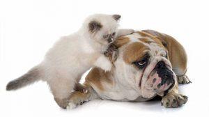 Assicurazione cane gatto : chi siamo ?