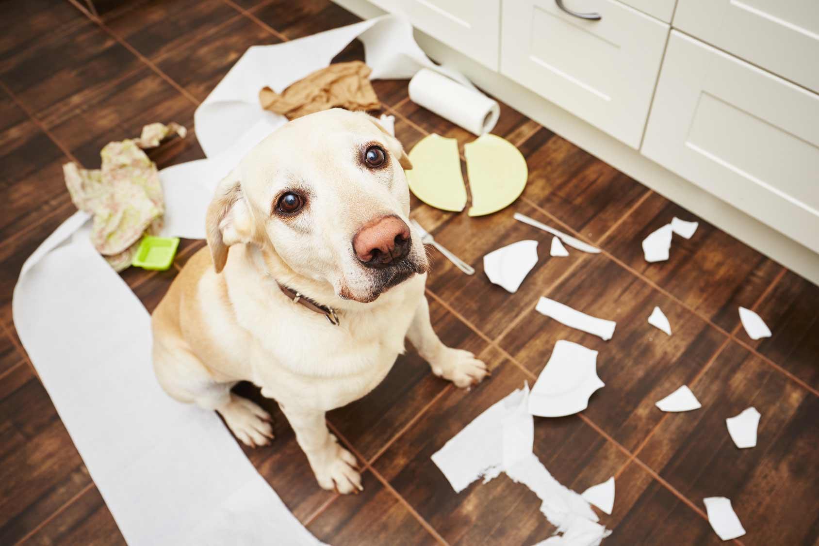 Blog cani : comportamenti del cane, capire i cani