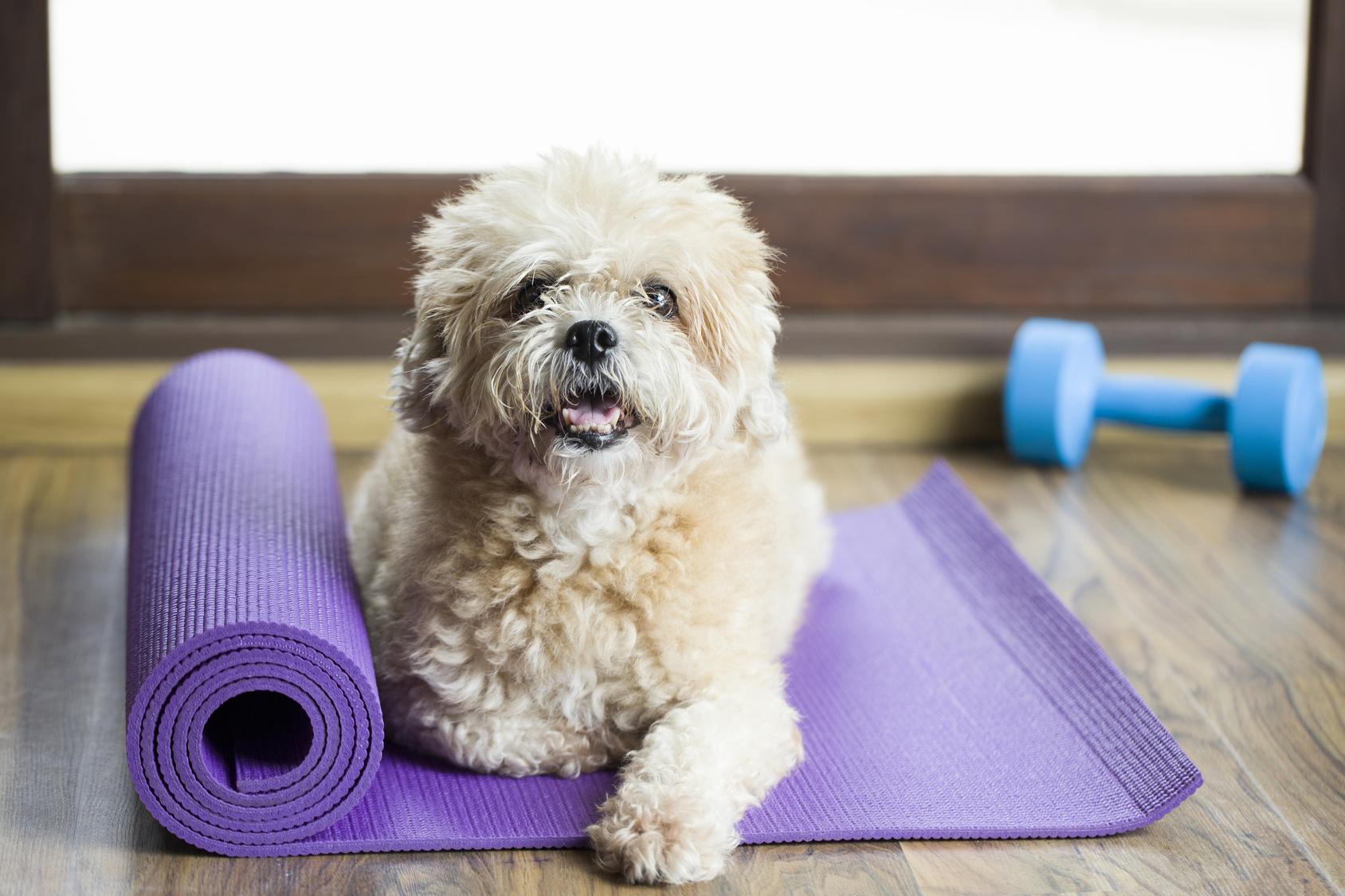Blog cani : Benessere del cane