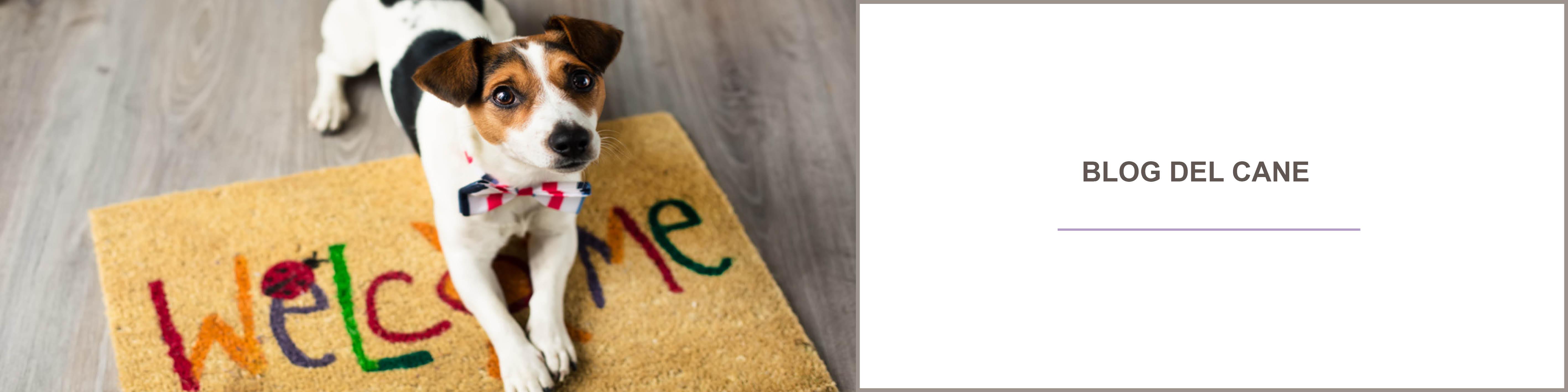 Blog cani : comportamento cani - assicurazione per animali domestici