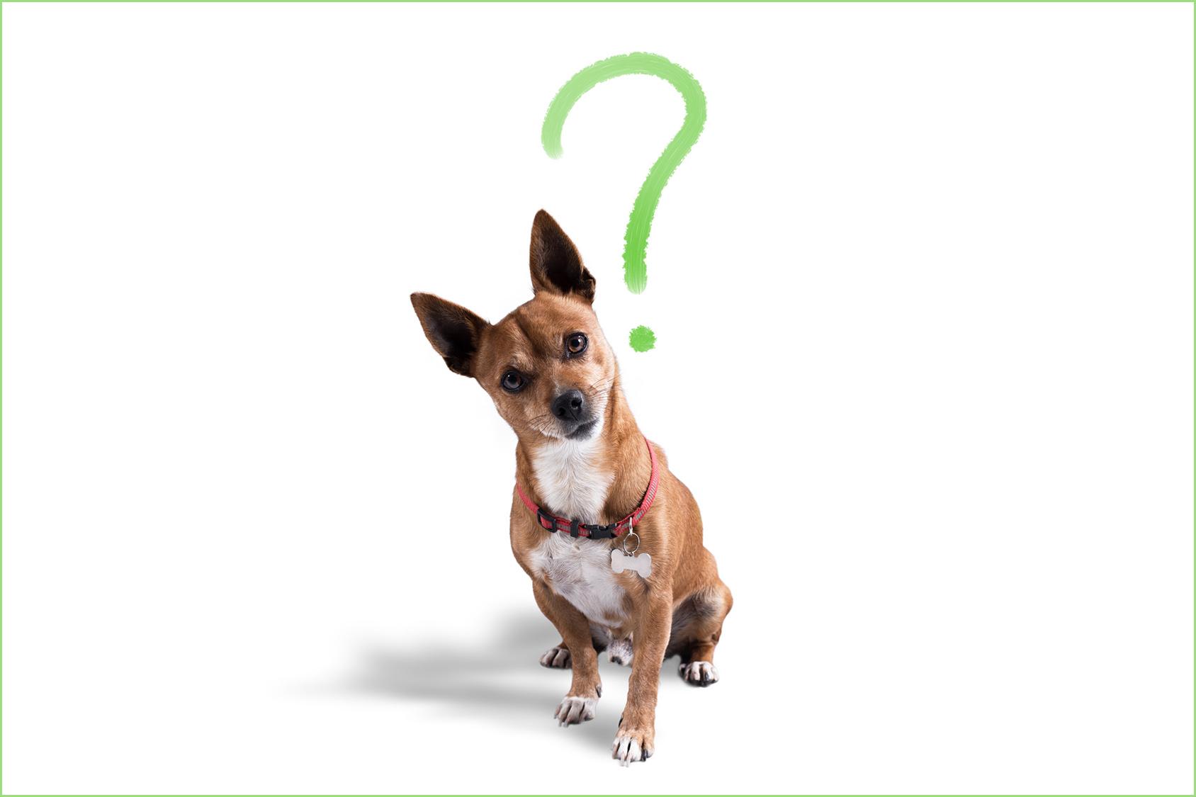 Blog cani: consigli per cani
