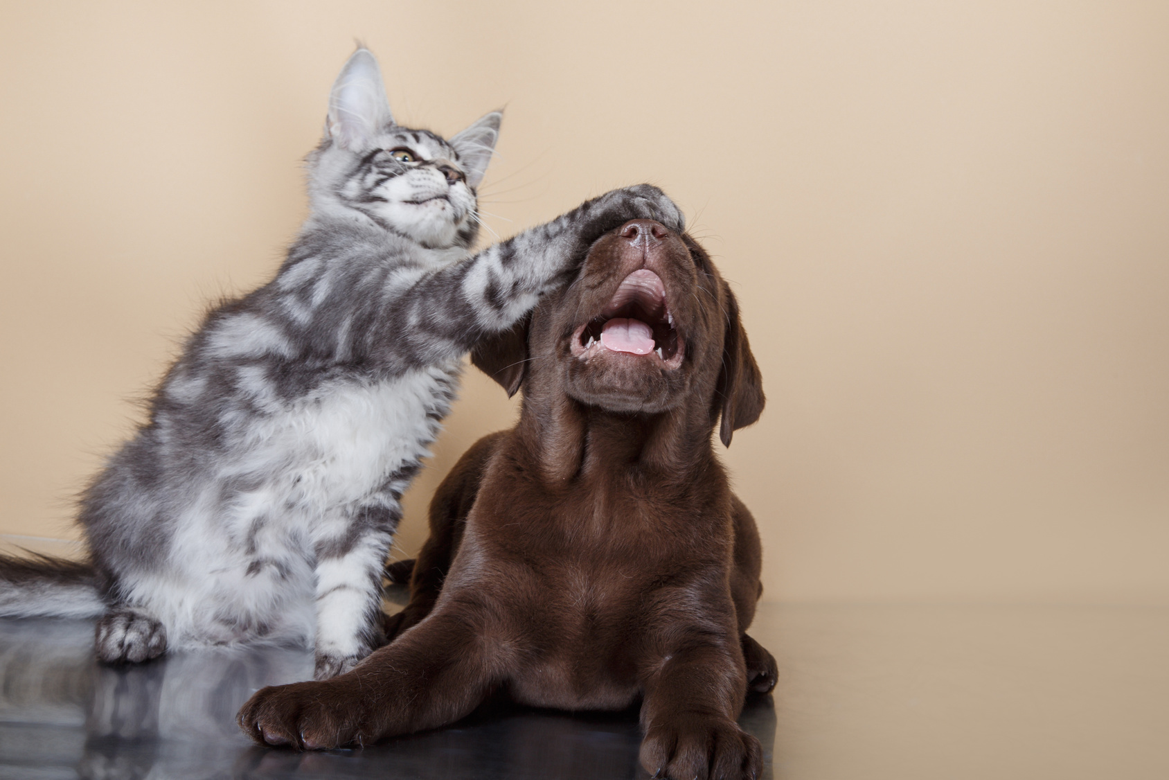 Blog cani : Notizie cani, news sui cani