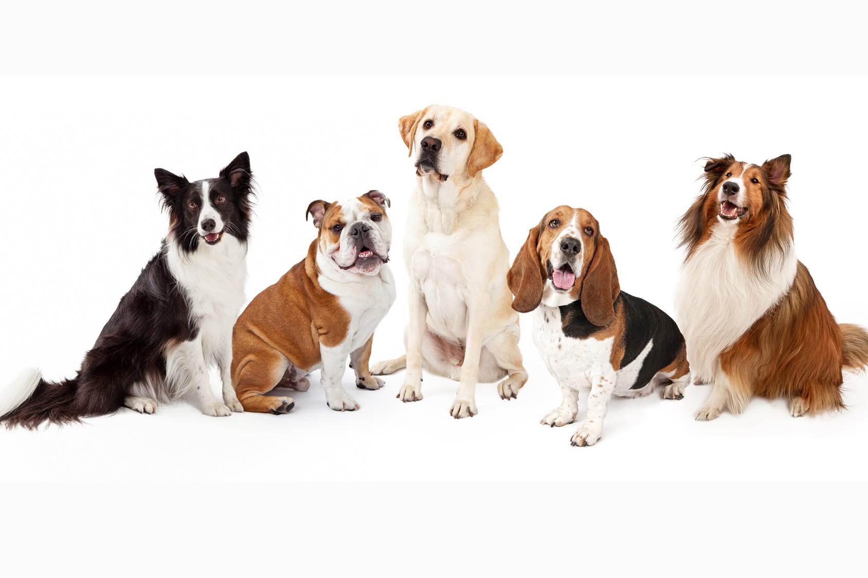 Blog cani : Razze di cani, tutte le razze di cani