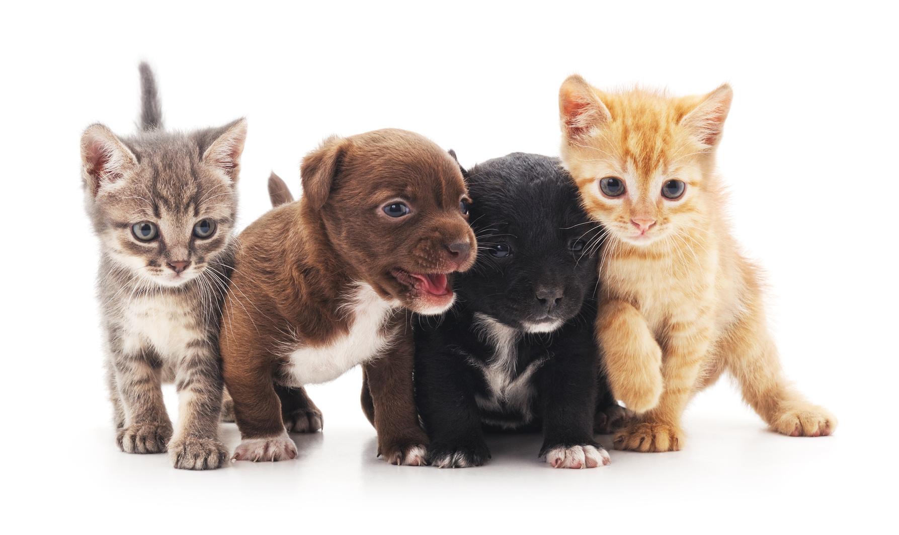 Assicurazione animali domestici prezzi