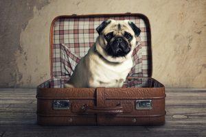 Week end con il cane : Vacanze con i cani