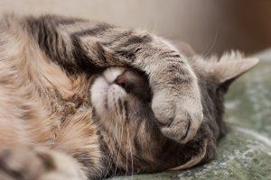 Malattia del gatto : come sapere se il gatto sta male