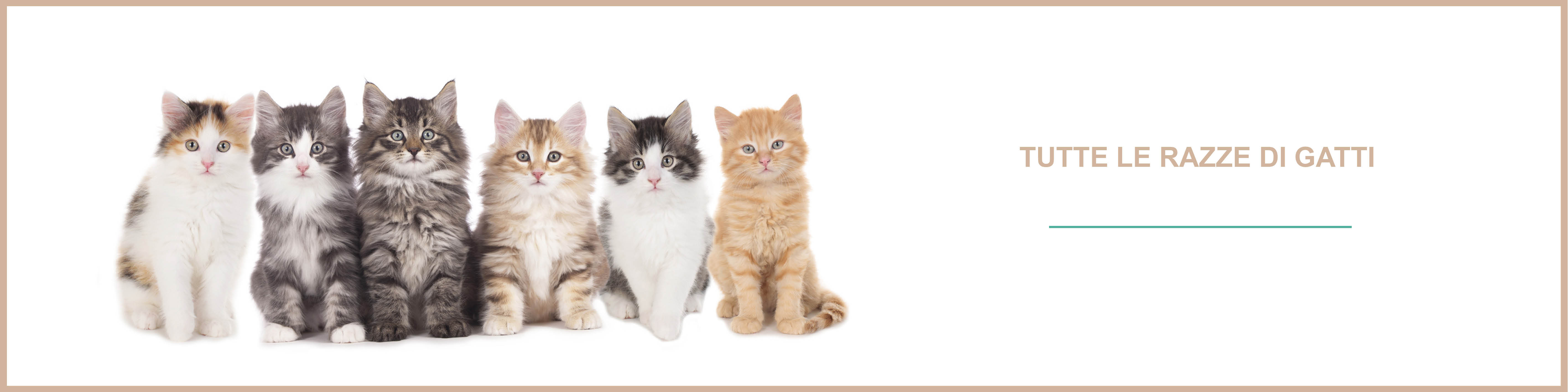 Tutte le razze di gatti e tutte le razze dei gatti