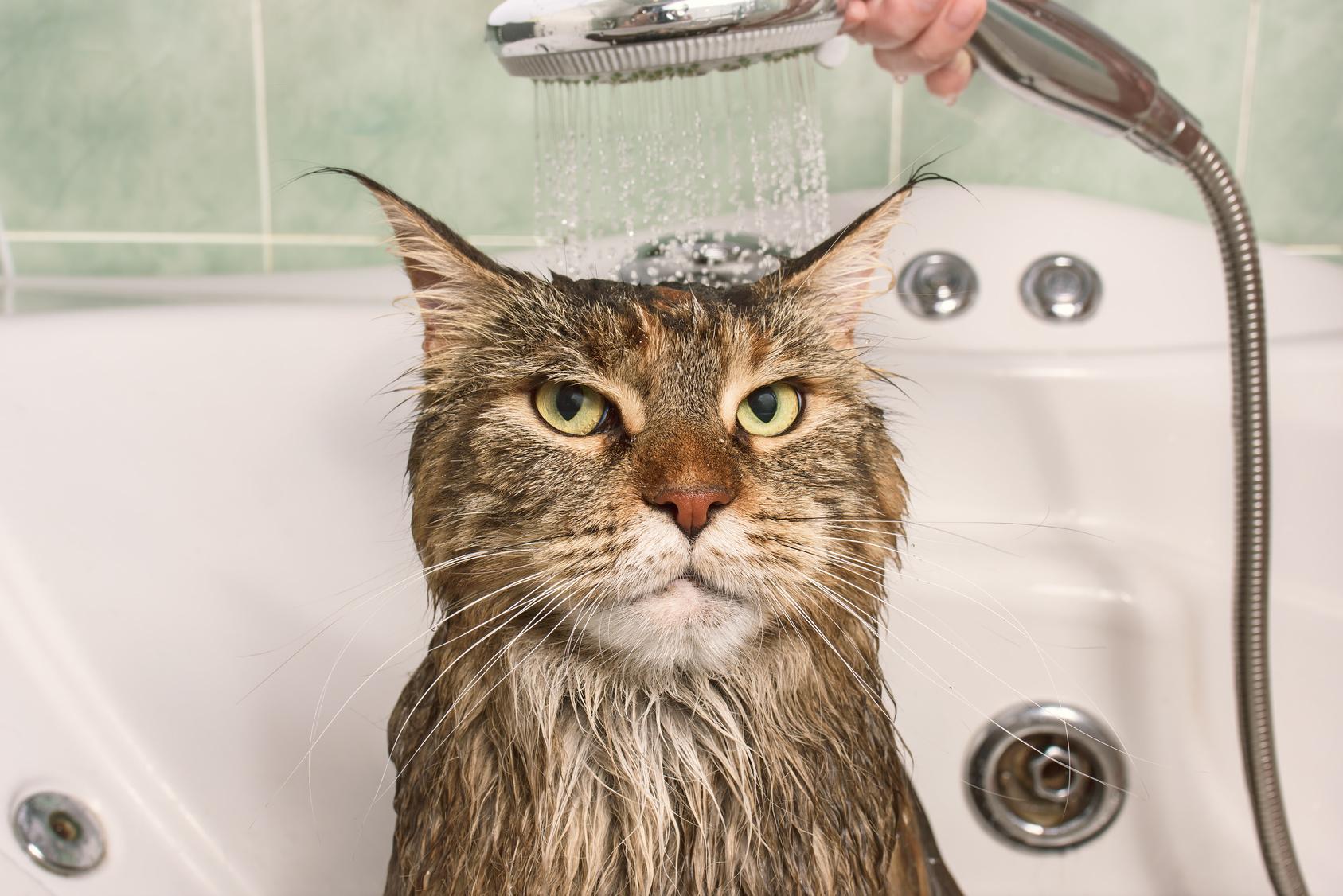 Perchè i gatti hanno paura dell'acqua ?