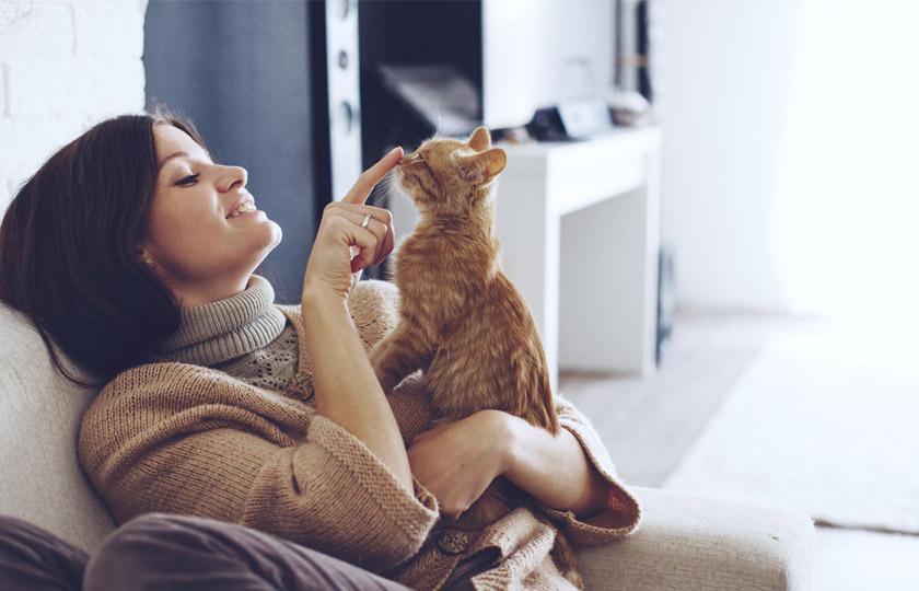 Punire il gatto : educare gatto