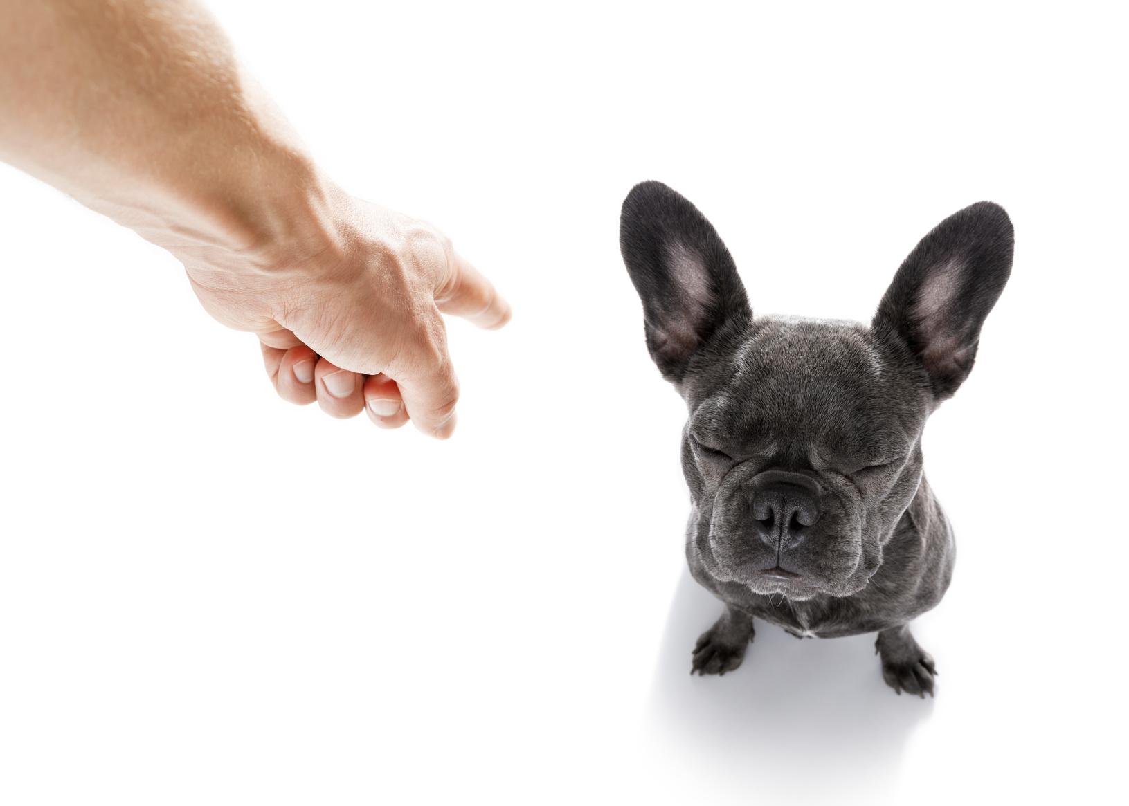 Come educare un cucciolo di cane : educare un cane
