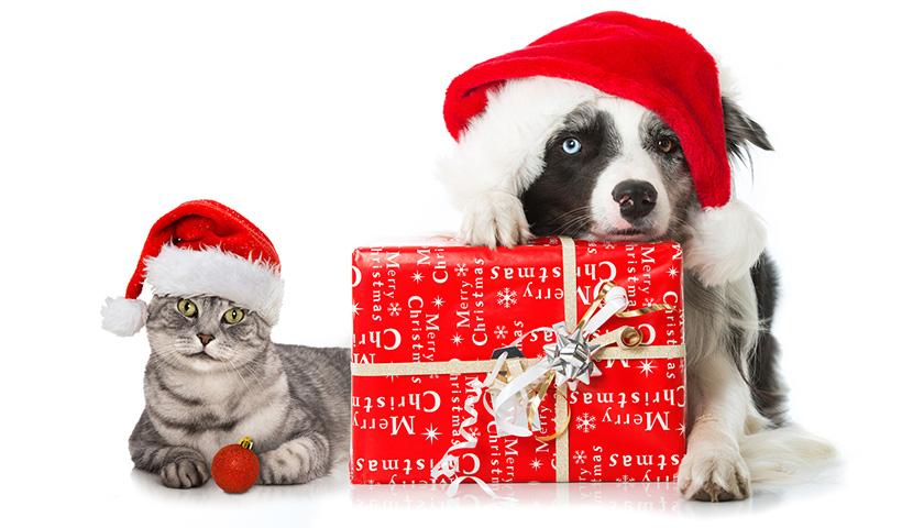 Regali Di Natale Per Cani E Gatti Cosa Regalare Ai Vostri Animali