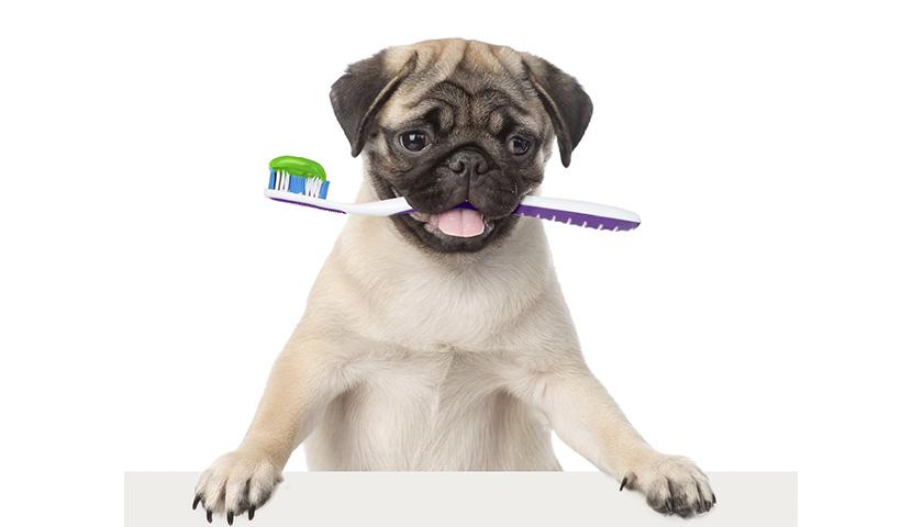Come lavare i denti al cane ?