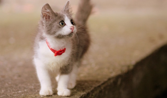 Gatto magro o gatto dimagrito