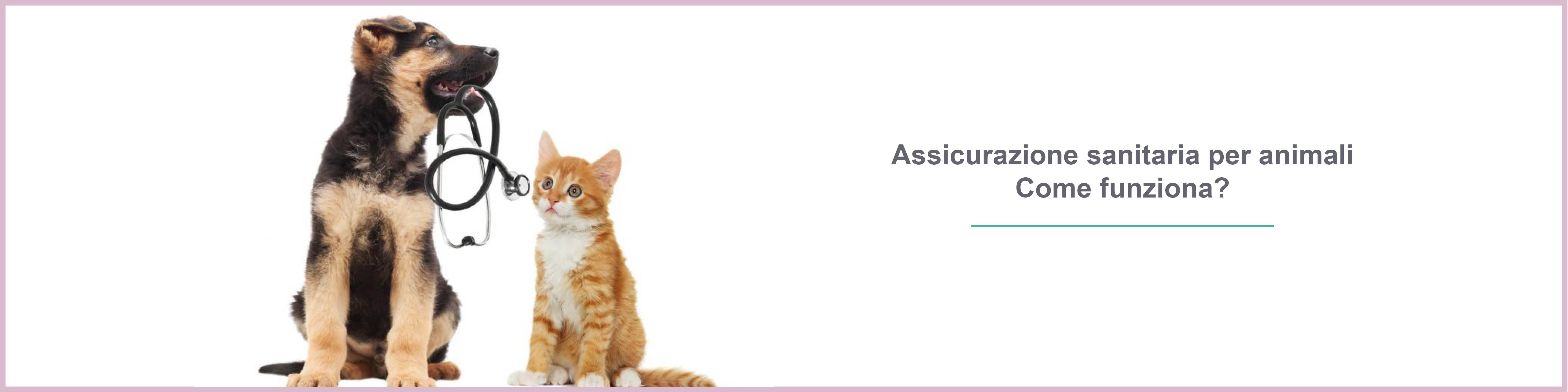Assicurazione animali domestici, assicurazione spese veterinarie : come funziona ?