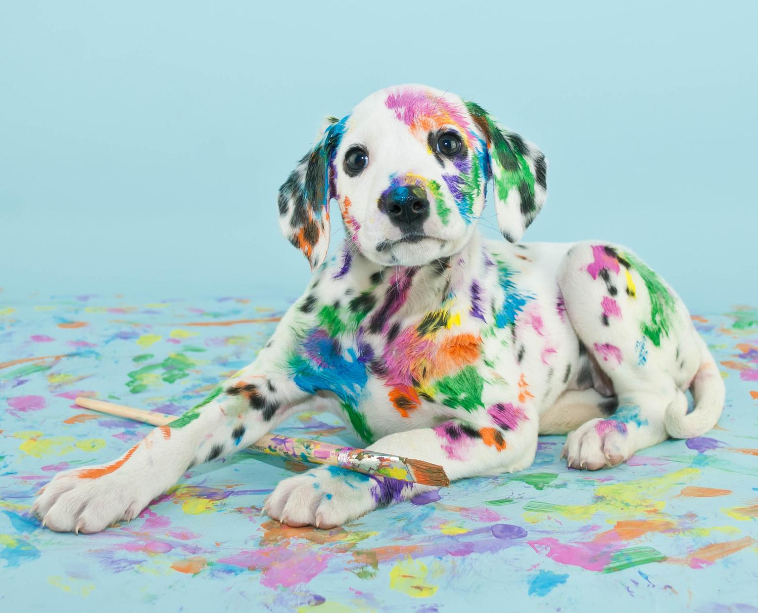 Assicurazione X Cani E Cuccioli 6 Incidenti Più Frequenti Per Il