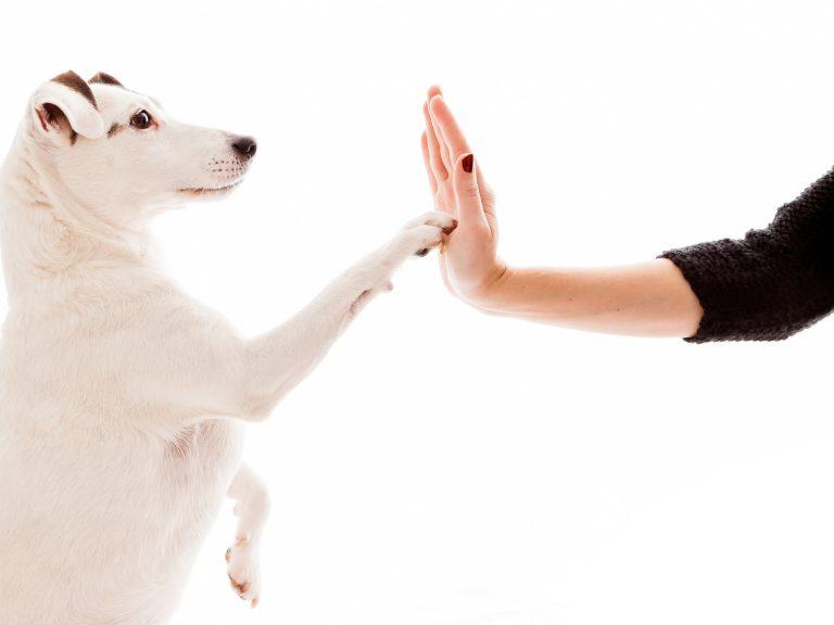 Costo vaccino cane : perche è importante e quanto costa?