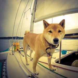 Vacanze col cane
