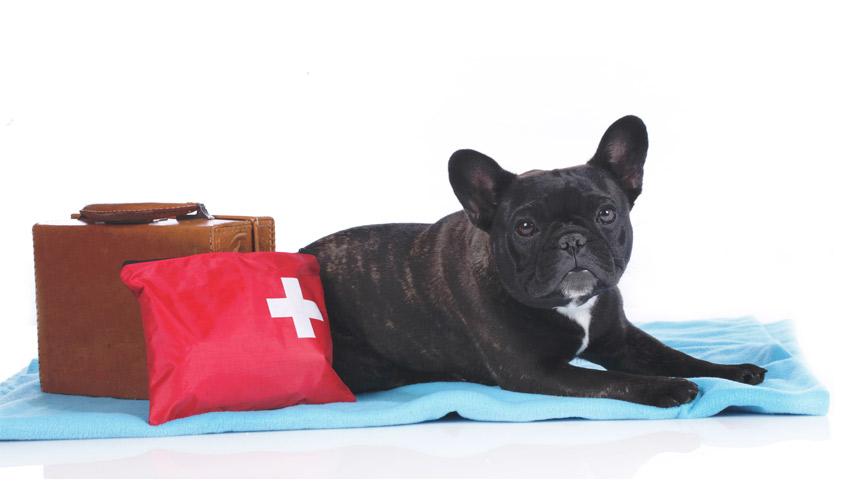 Vacanze col cane : come viagiare col cane?