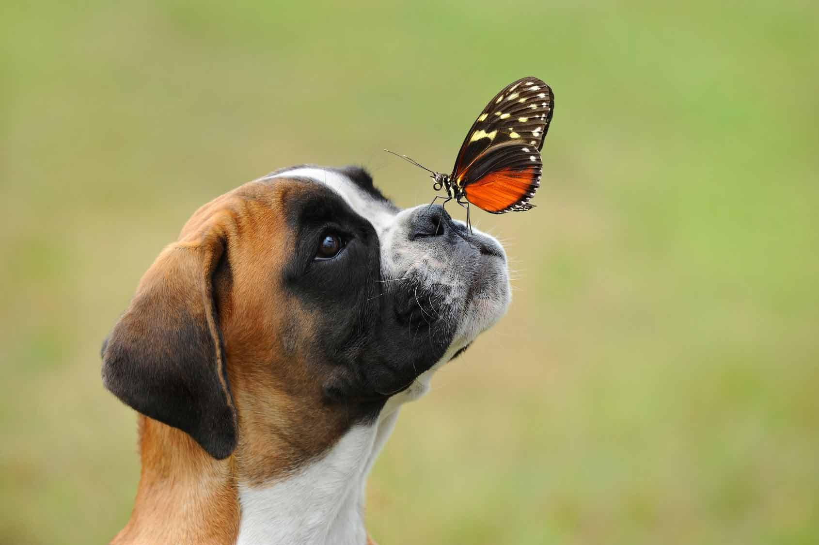 Puntura vespa cane