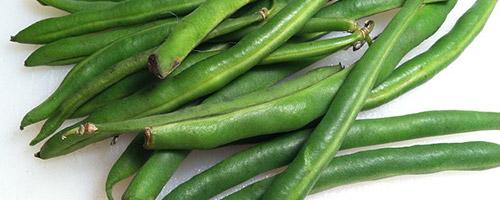 Alimentazione naturale cane e verdure per cani