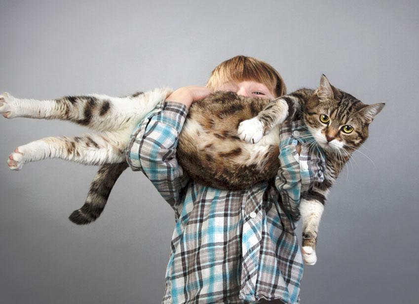 Gatti obesi : come far dimagrire un gatto?