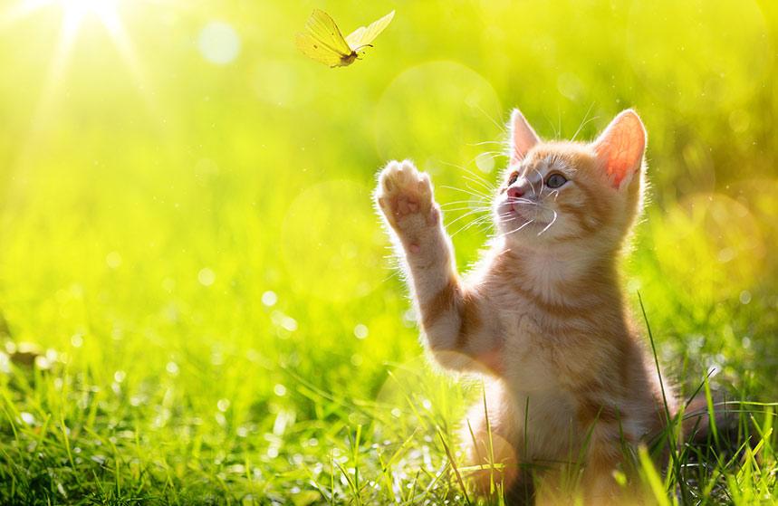 Come rendere felice un gatto