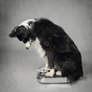Dieta casalinga cane Dieta per cani: soluzioni per cani in sovrappeso