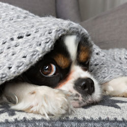 i cani hanno freddo? i cani sentono freddo?