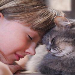 Gatti docili da appartamento : sono felici ?