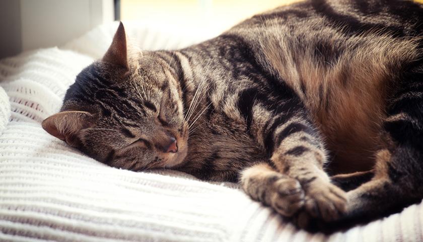 Il mio gatto dorme sempre!