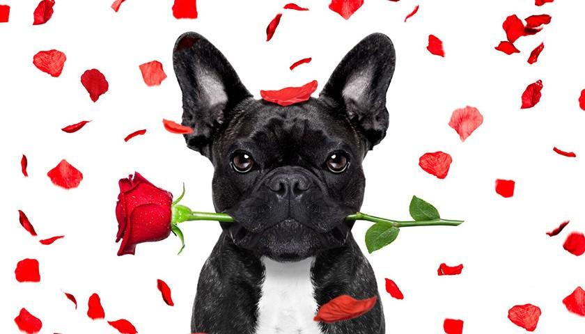San valentino cani, San valentino gatti, regalo per cani, regalo per gatti