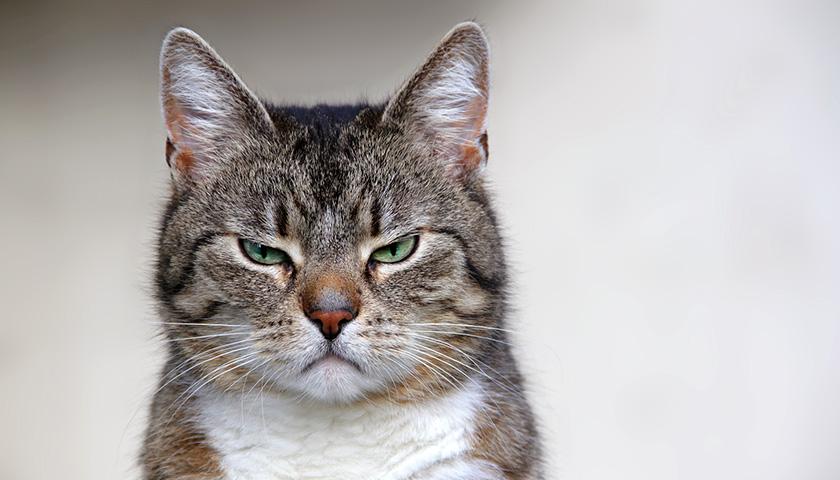 Psicologia dei gatti : provanno emozioni?