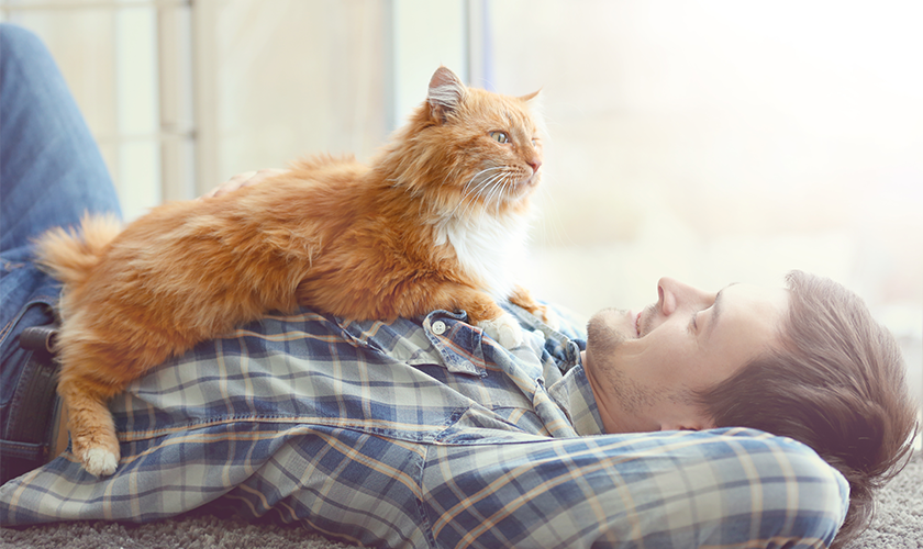 Quarantena con il proprio gatto : Come organizzarsi ?