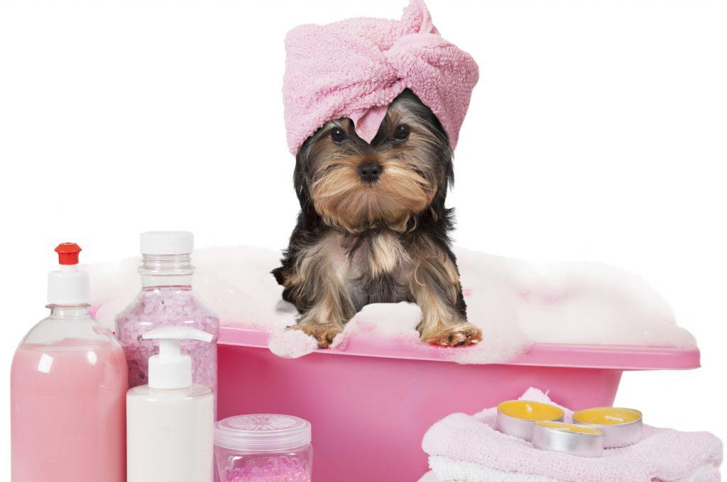 Assicurare il cane, assicurazione per cane