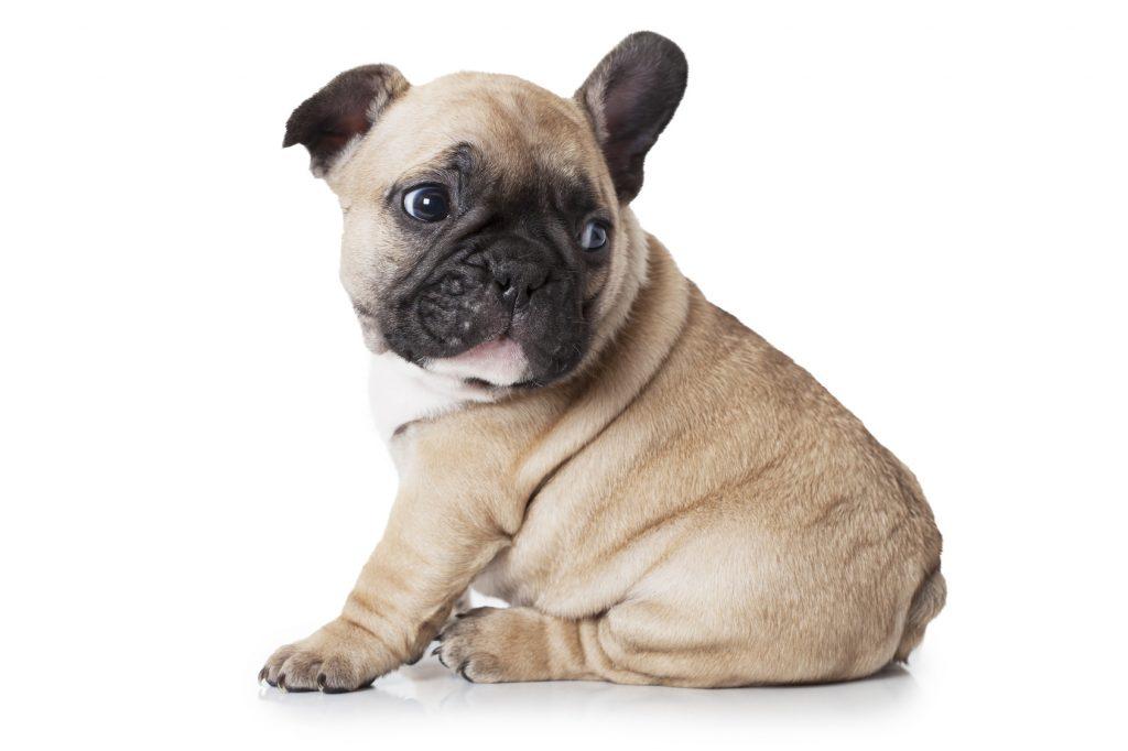 Assicurazione cane, assicurazione sanitaria cane