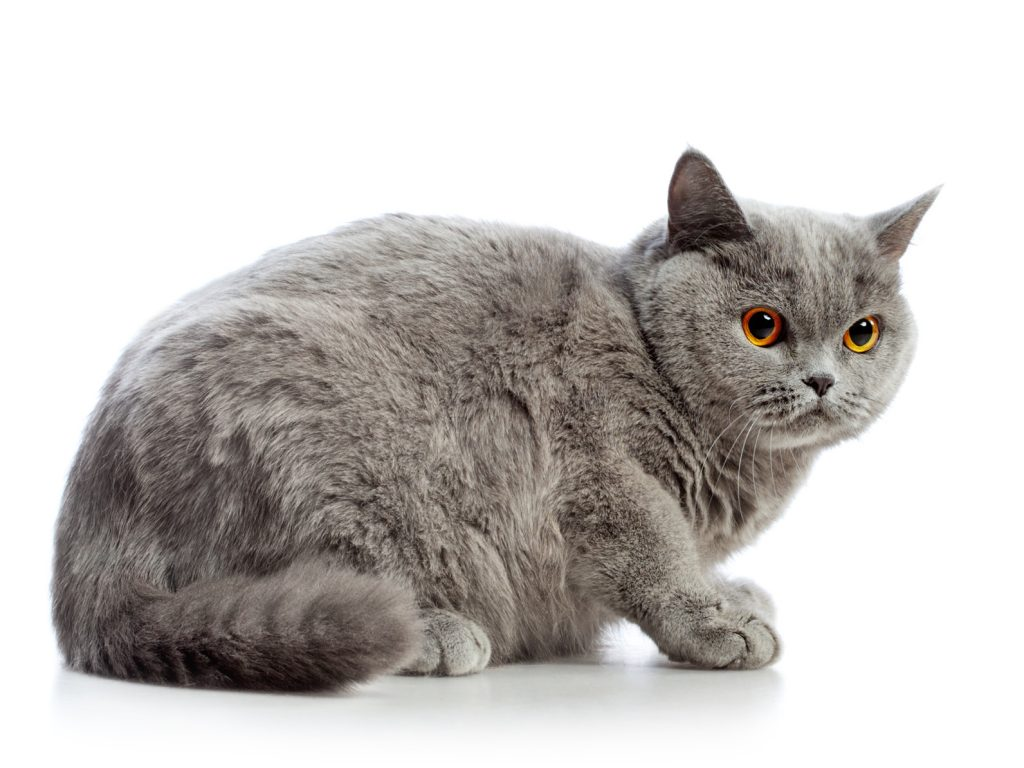 Assicurazione gatto : malattia