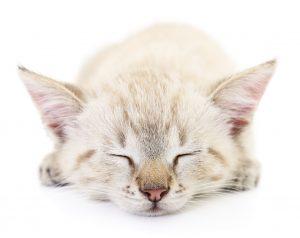 Assicurazione gatto : perche assicurarlo ?