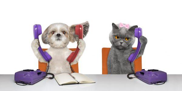 Contatto : contattaci Assur O'Poil assicurazione per cane e gatto