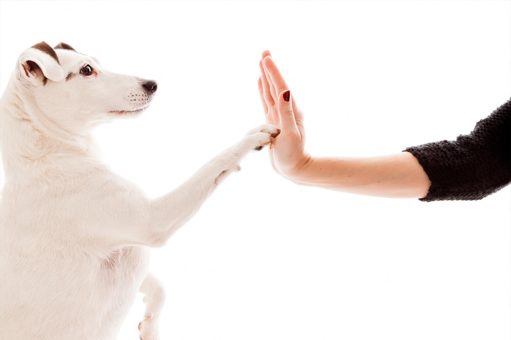 Blog cani : come funziona assicurazione cane?