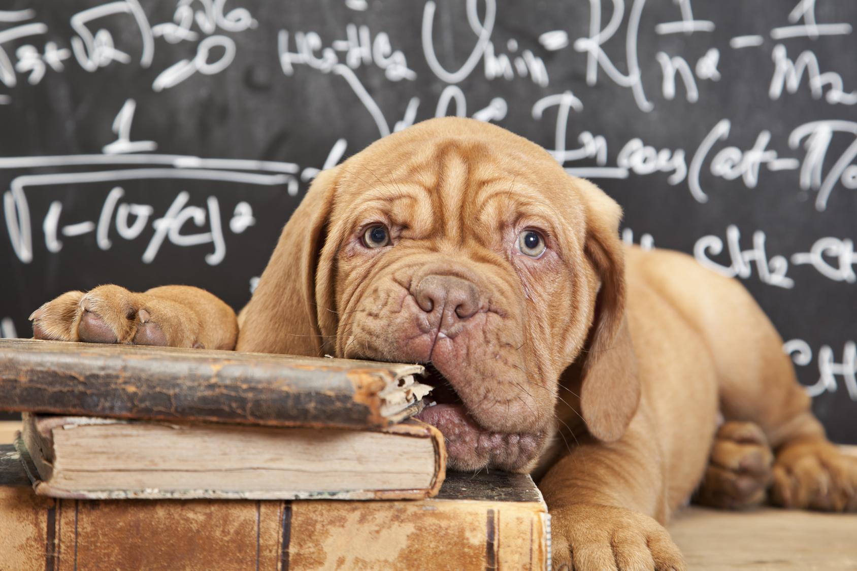 Blog cani : Educazione cane, come educare un cane