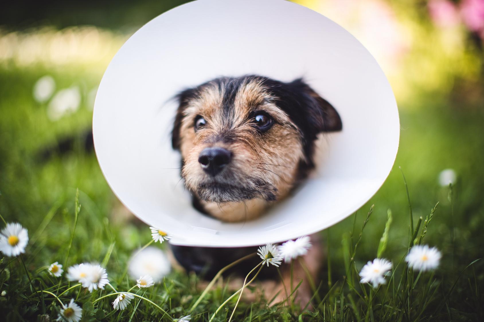 Blog cani : Incidenti cani, ferite nei cani, infortuni cani