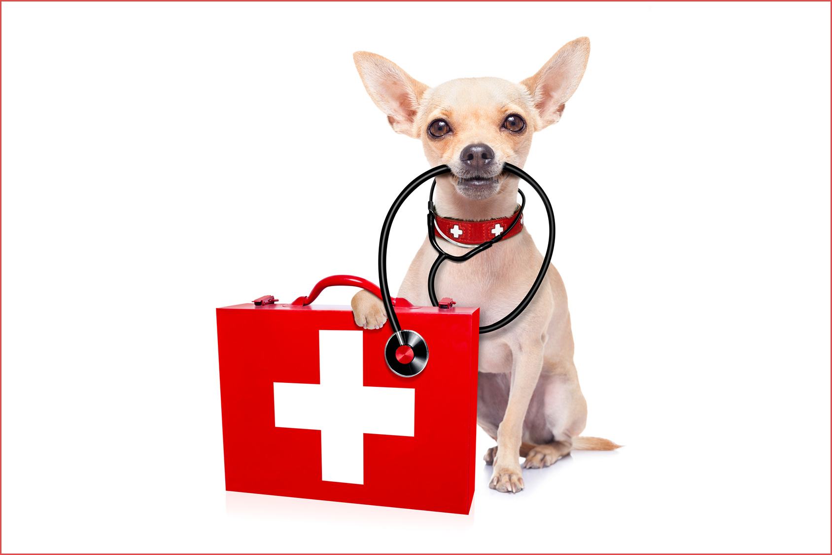 Blog cani : salute del cane, malattia dei cani