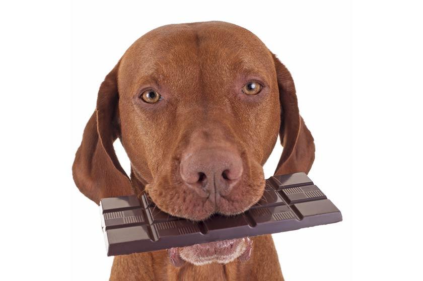 Intossicazione cane sintomi, alimenti tossici cane