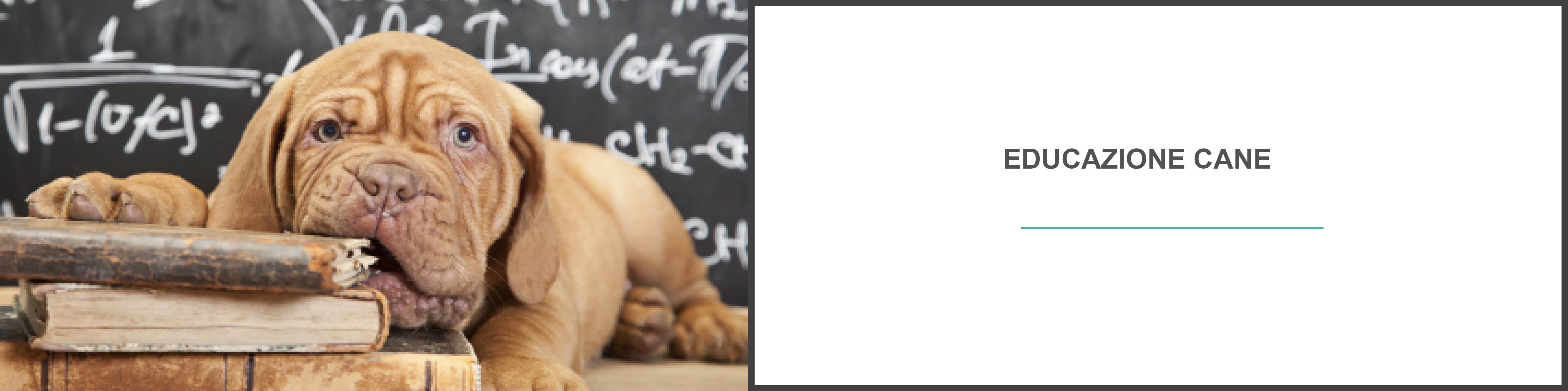 blog cani : educazione cane, educare